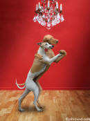 picture of dogs dancing the tango